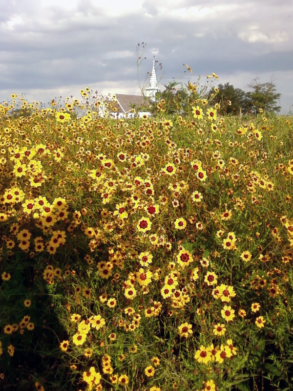 Flowers and Stuhr church